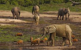 Le parc national de l'Ivindo - Gabon