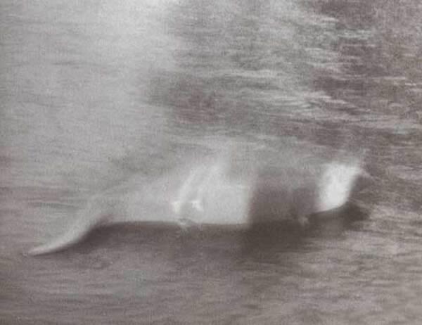 Cryptozoologie:  Monstre du Loch Ness