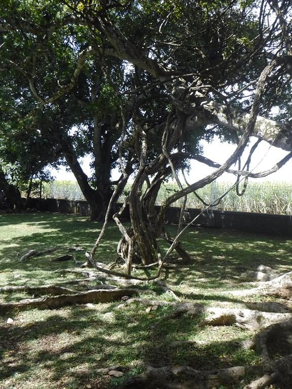 Ile Maurice - Château de Labourdonnais - pdf et photos