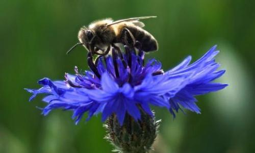 Pétitions en faveur des abeilles