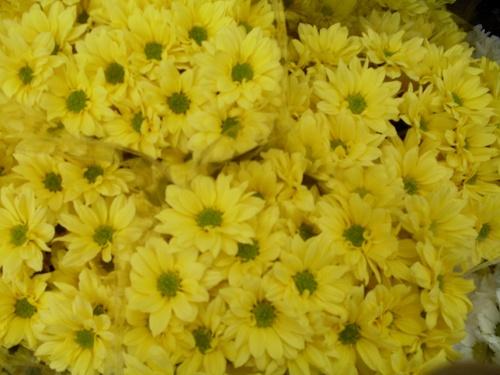 Symphonie en jaune