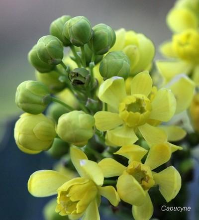Fleurs de saison...
