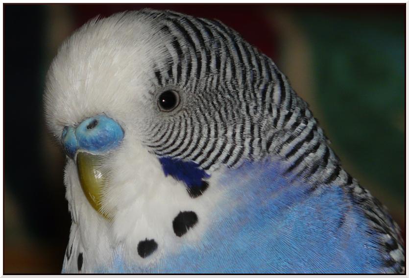 A poils ou à plumes !