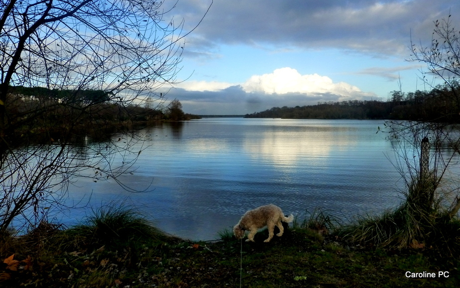 L'hiver au lac de Mimizan