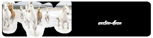 design : la liberté des chevaux en camargue