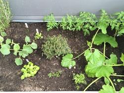 La serre aux légumes bio