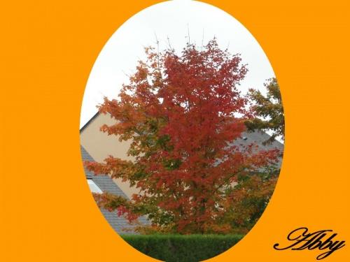 Bel arbre au couleur de l'automne