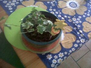 un peu de verdure à la maison