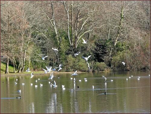 Biarritz le lac Marion