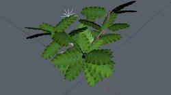 -L'arbuste à grandes feuilles
