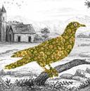 Oiseaux, Paul Badin