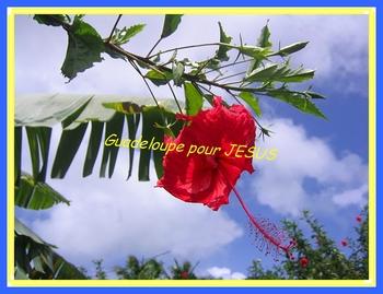 fleur_hibiscus
