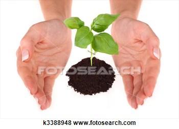 Banque de Photo - personne, tenue,  petit, plante.  fotosearch - recherchez  des photos, des  images et des  cliparts