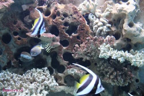 aquarium de liège