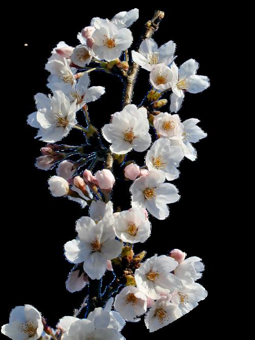 Tavaszi png képek