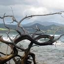 Avant la plage de la Pointe Rouge, vers Trinité - 3 - Photo : Hervé