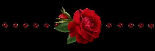 """"""" Roses de Juin"""