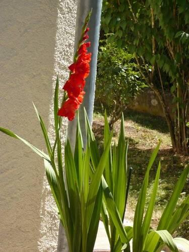 Jardin 19-07 (2)