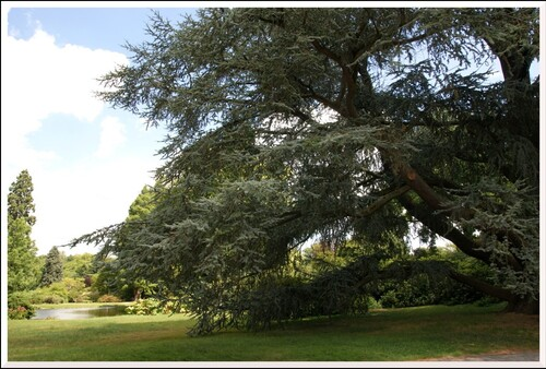 La Vallée-aux-Loups. 3.L'Arboretum