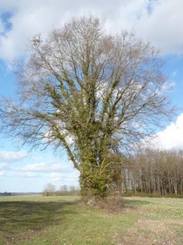arbre-en-février