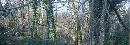 Wolu1200 : Le bosquet marécageux Hof-ten-Berg menacé !