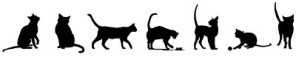 ribambelle chats