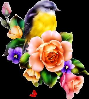 Oiseaux vectoriels 2