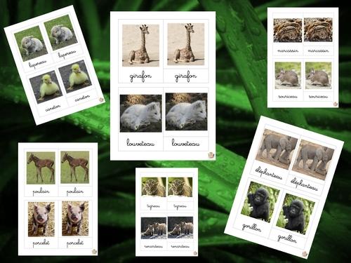 Les animaux : pochettes de vocabulaire