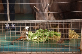 Zoo Saarbrücken 2012 020