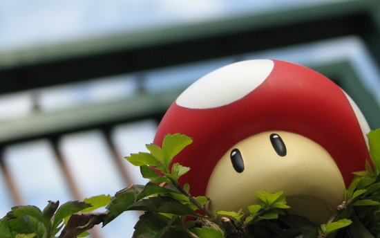 mario_mushrooms_mushroom_desktop_1280x800_wallpaper-286001