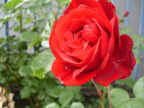 Une belle en rouge