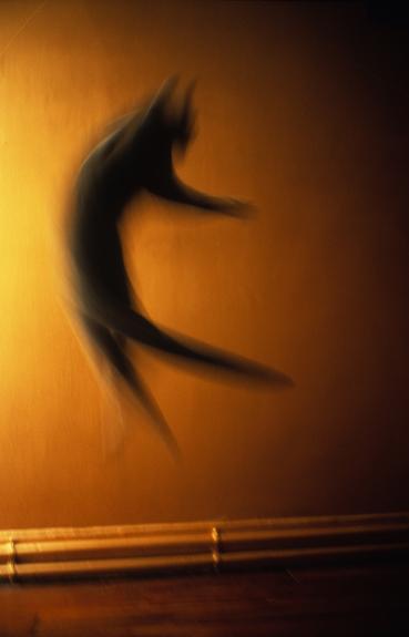 21- Le chat vole