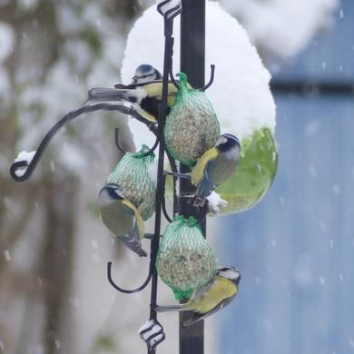 Oiseaux dans la neige...