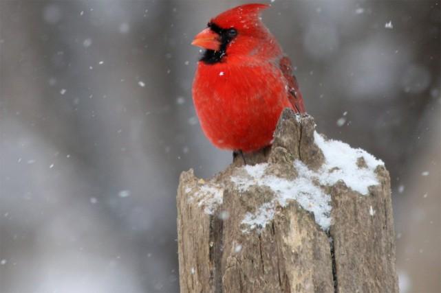 La mangeoire d'oiseaux constitue un vrai plaisir pour... (PHOTO THINKSTOCK)