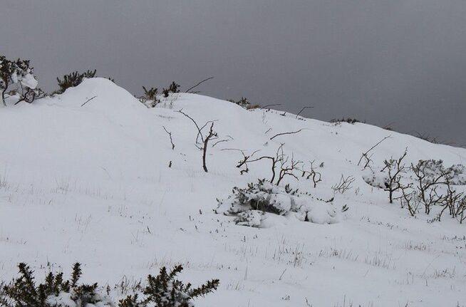 Neige en Monts d'Arrée 076
