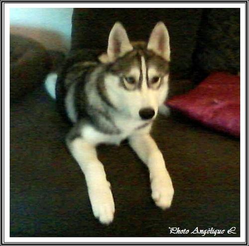 Jeska (5 mois)