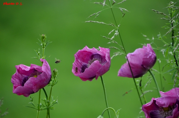 Insectes et fleurs, de superbes photos de D.S.....
