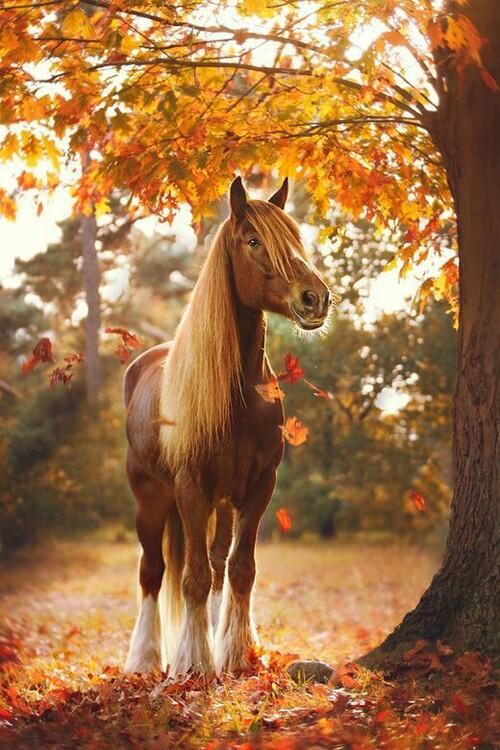 Cheval en automne