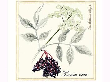 Le sureau - I. Francès - Rustica