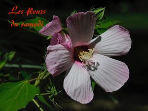 Les fleurs du samedi