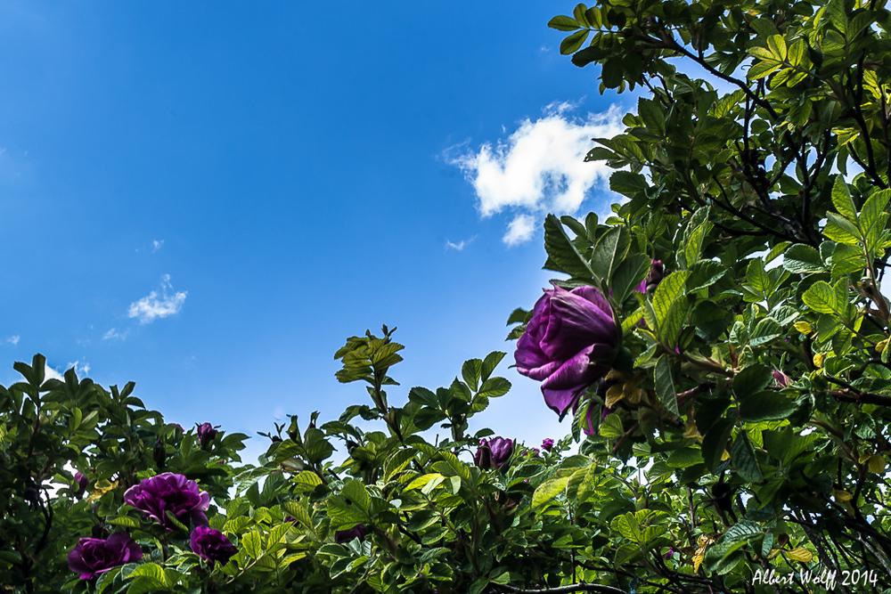 Sur la route deS fleurs - Cressia - 39