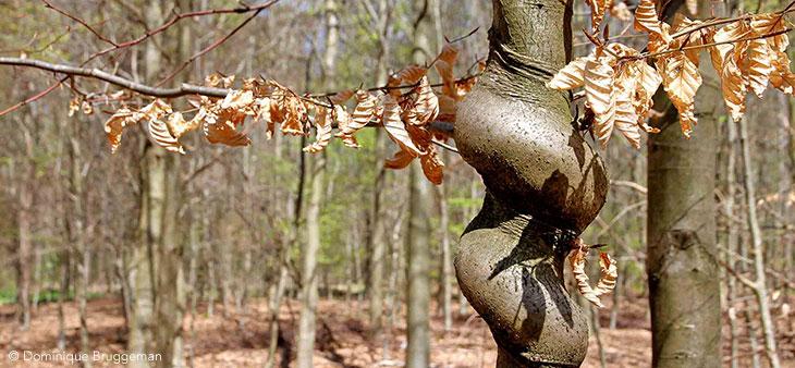 « Découvre l'arbre !», à Raismes