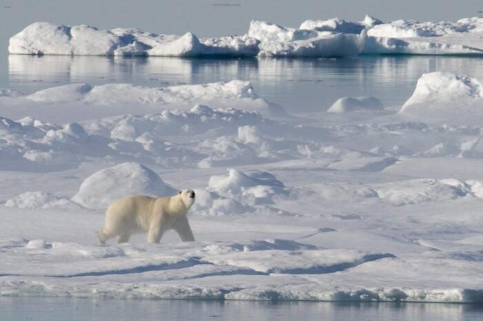 Balade En Antarctique -  L'image Magique & Fascinante