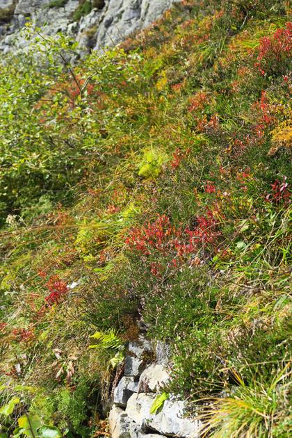 Instants d'automne