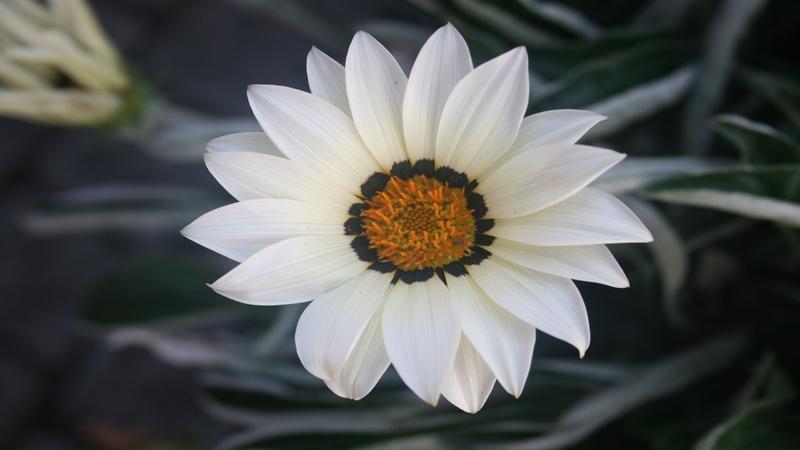 20 images de fleurs