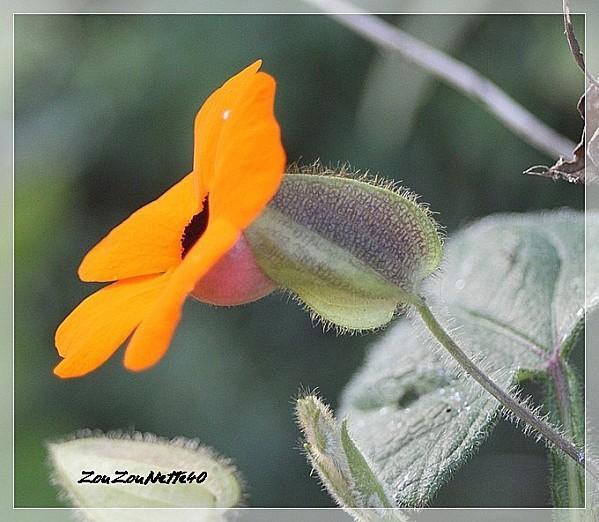 PROMENADE-FLEURIE--09-OCTOBRE-2012-N--8-.jpg