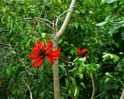 beauté nature