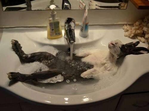 Le lapin qui aime son bain