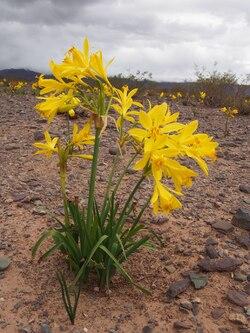 De jolies fleurs jaunes au milieu de ce désert