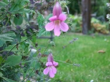 L'image contient peut-être: plante, fleur, plein air et nature